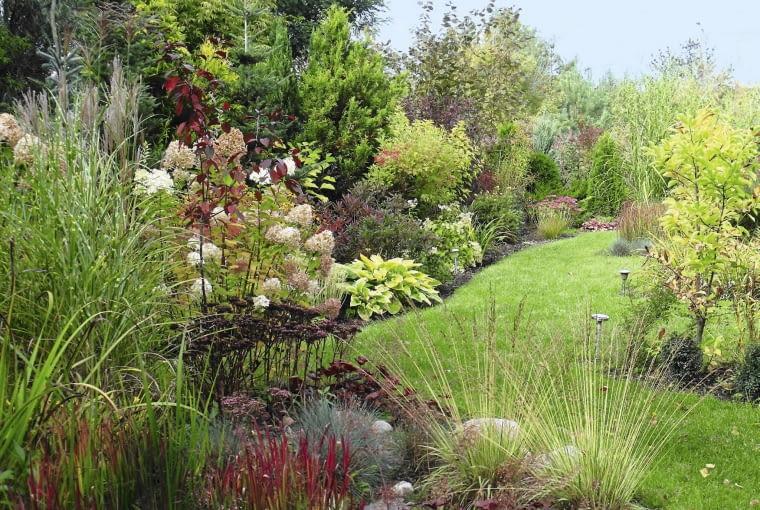 Rabata bylinowa późnym latem zachwyca kolorami ozdobnych traw, rozchodników i hortensji.
