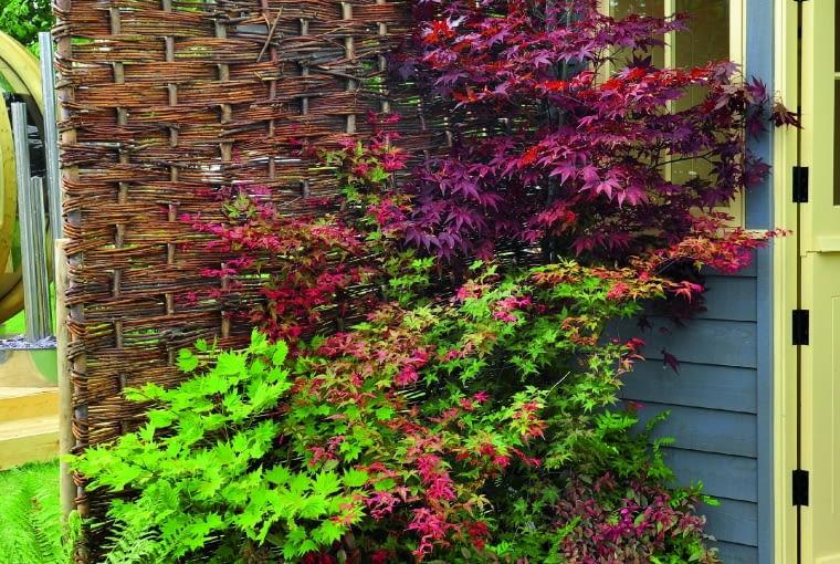 Parawan upleciony zwiklinowych witek dodaje ogrodowym zakątkom przytulności i swojskiego klimatu.