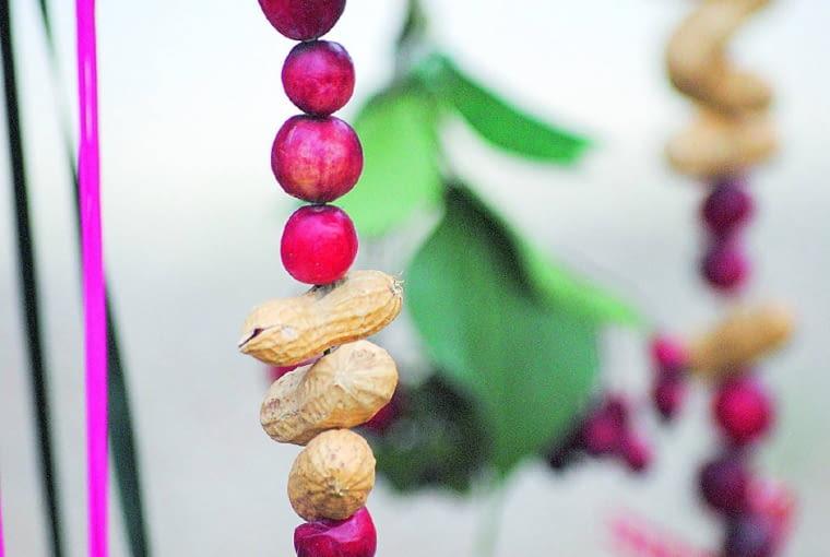 Wokresie Bożego Narodzenia robię bardziej dekoracyjne ismakowite zawieszki. Zwykle wykonuję je zorzeszków ziemnych oraz żurawiny, nawleczonych jak koraliki na cienki metalowy drucik. Do mieszanki tłuszczowej dodaję czerwone owoce głogu iwypełniam nią foremki do ciastek, które zawieszam na kolorowych wstążeczkach. Iwogrodzie robi się świątecznie!