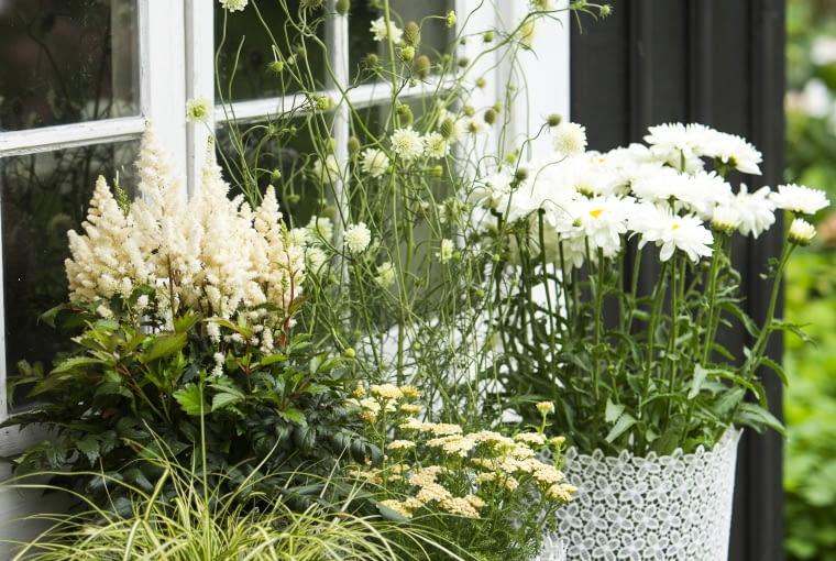 Kwiaty kwitnące na biało