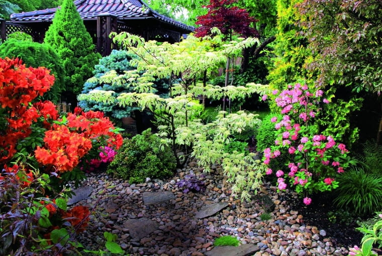 Wiosna w ogrodzie to czas azalii- kwitnąc, dodają mu koloru i wypełniają go słodkim zapachem kwiatów.