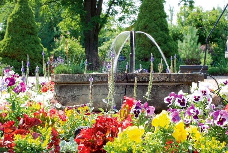 Nieduża fontanna wwieńcu sezonowych kwiatów, z bratkami i begoniami w roli głównej, uświetnia podjazd przed domem.