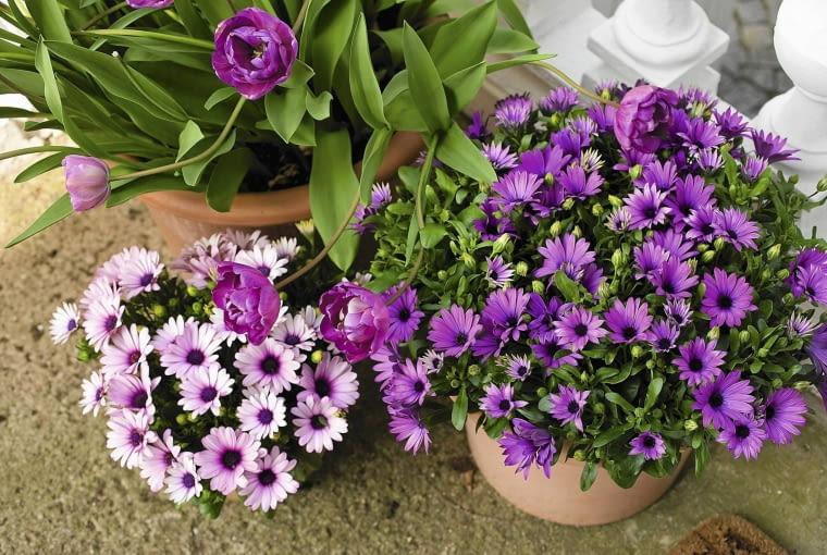 SLOWA KLUCZOWE: Floradania.dk lilla lila lilac pink terasse terrace terrass