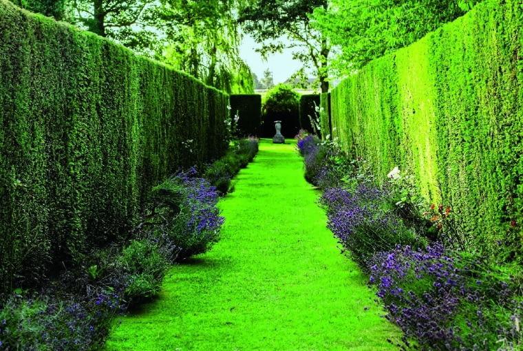 Szpalery z różnych odmian roślin iglastych i lawendy.