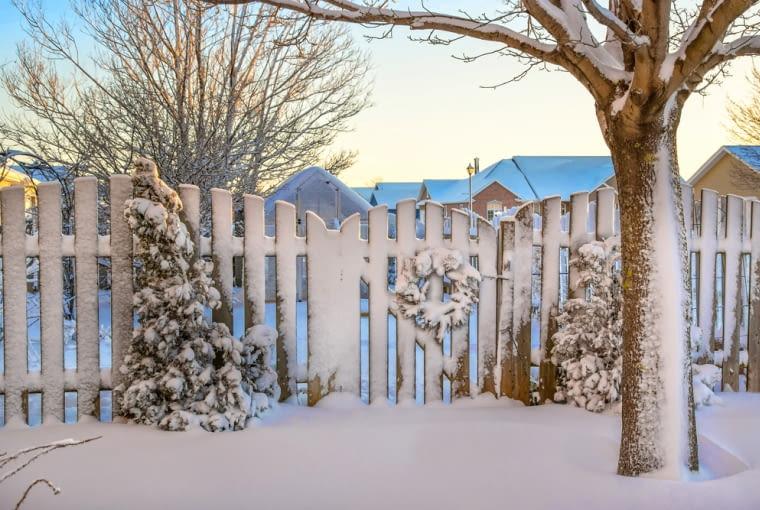 Zimowe zagrożenia dla roślin w ogrodzie