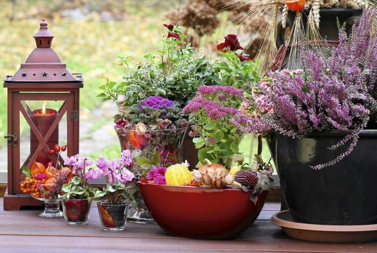 DEKORACJA Z WRZOSU, rozchodnika okazałego, ozdobnej kapusty, cyklamenów i owoców w miseczkach - prosta, a efektowna.