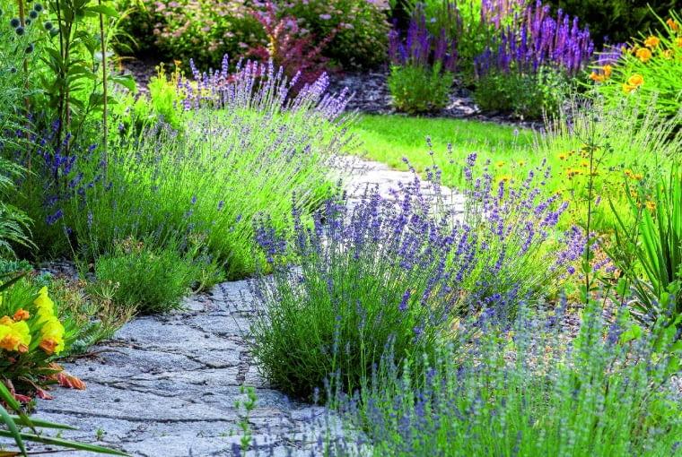 Lawendy iszałwie towarzyszą umocnionej szarym łupkiem ścieżce wiodącej wgłąb ogrodu. Byliny zgrupowane na rabatach oddzielono krzewami od otwartej przestrzeni rekreacyjnej.