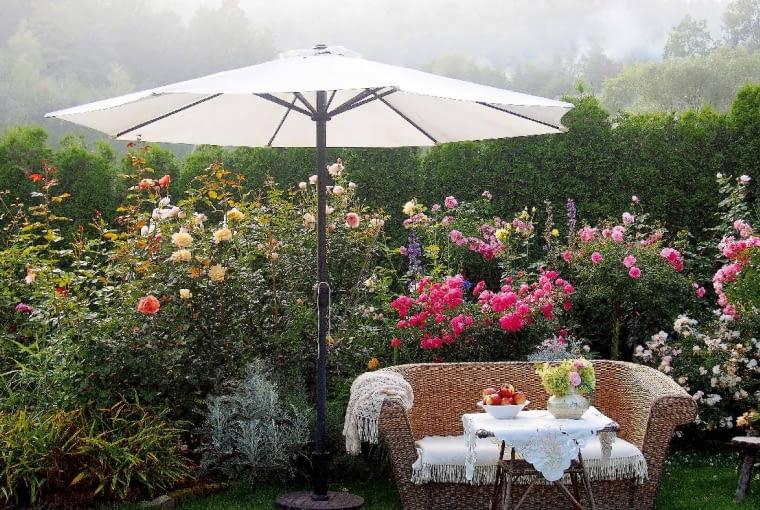 Róże! Pachnące izjawiskowe - wszystkie są piękne! Wmoim ogrodzie rośnie kilkanaście odmian. Po kilku latach ich uprawiania nauczyłam się, które są godne uwagi ipolecenia.