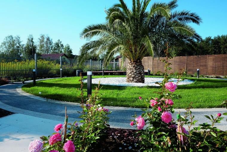 Widok jak na warszawskimrondzie de Gaulle'a, ale tu palma jest prawdziwa. Daktylowiec kanaryjski znosi krótkotrwałe spadki temperatury do -8°C. Radzimy więc nie ryzykować i dobrze zabezpieczyć roślinę przed mrozem.