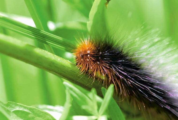 SLOWA KLUCZOWE: owady, motyle