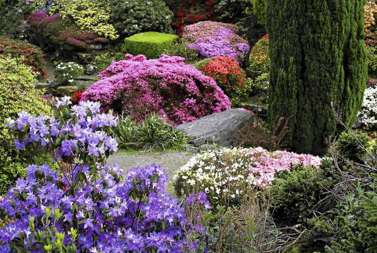 01AB9W4J - Different coloured Rhododendrons at Leonardslee Gardens, laid out by Sir Leonard Loder