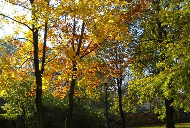 Park w Rybniku przed wycinką