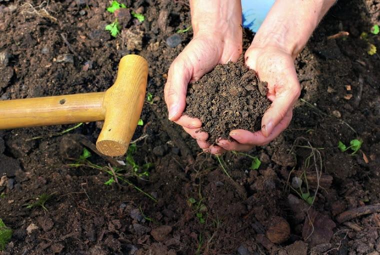 Próbki do badania gleby pobieramy z kilku miejsc na grządce i mieszamy je.