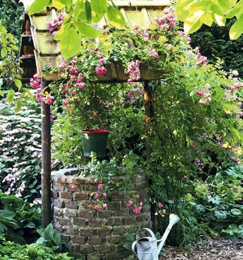 Old fashioned well with Rosa 'Dorothy Perkins'