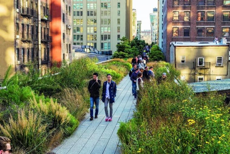 High line w wielu miejscach ma szerokość tylko kilku metrów. Na zdjęciu: kwitnące trawy i byliny.