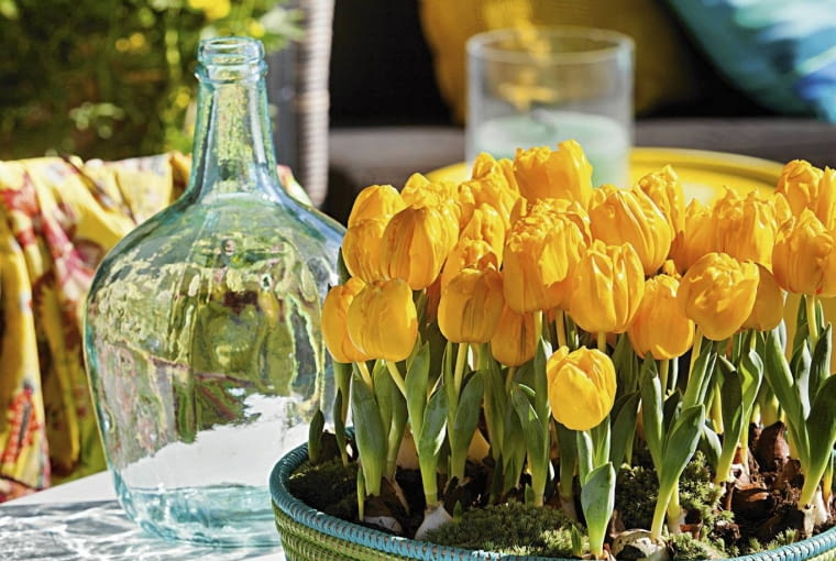 SLOWA KLUCZOWE: Pots & Containers Spring flowering bulbs in pots Terrace