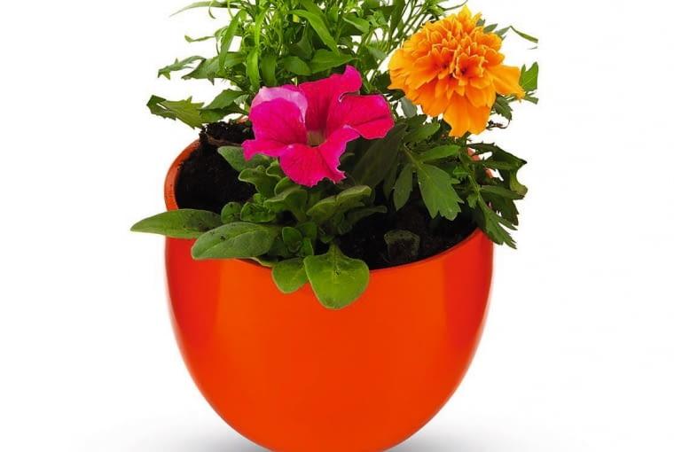 Rośliny, którymi zamierzamy ozdobić balkon, wystawiamy codziennie na zewnątrz