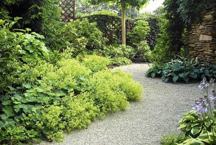 POD KORONAMI DRZEW posadzono rośliny cieniolubne.
