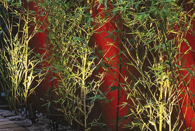 WALL PAINTED WINE RED AND YELLOW STEMMED BAMBOO (PHYLLOSTACHYS AUREA) LIT FROM BENEATH WITH DECKING AND STONE MULCH. LIGHTING BY GARDEN & SECURITY LIGHTING SLOWA KLUCZOWE: MAP3 GBA Sommer hoch Licht drau?en Garten 000 Bambus AUREA BENEATH BETONY BISHOPSWORT CHINA DECKING LIT Mulch Phyllostachys SECURITY STEMMED bamboo evergreen garden herb lighting painted red stone wall wine yellow Lichter ABENDSTIMMUNG ABEND