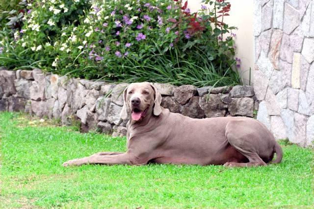 Podwyższone rabaty to dobry sposób na ochronę roślin przed wydzieliną psiego pęcherza.