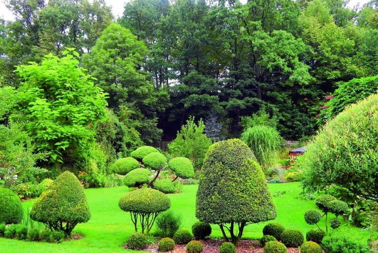 Ogrodowe rzeźby - topiary - to nasze odkrycie sprzed paru lat. Zmieniliśmy w nie nawet wiekowe bukszpany.
