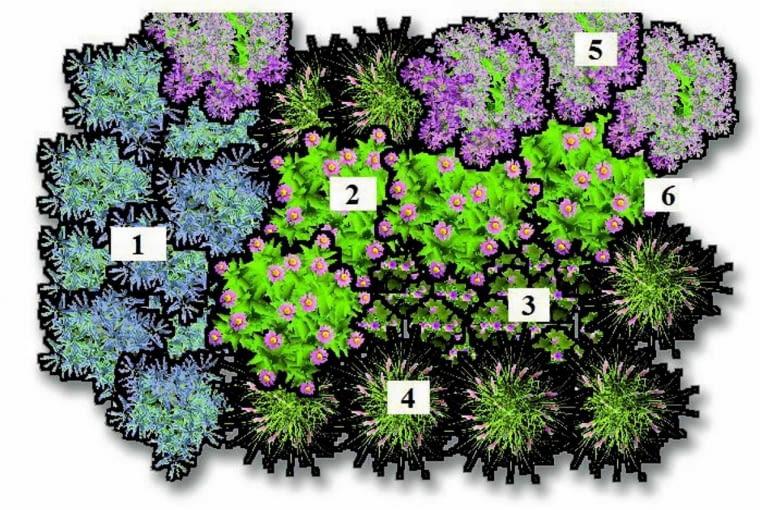 Plan nasadzeń rabaty:<br> 1. perowskia łobodolistna (Perovskia atriplicifolia) 'Blue Spire' 2. jeżówka purpurowa (Echinacea purpurea) 'Rubinstern' 3. rozchodnik okazały (Sedum spectabile) 'Autumn Joy' 4. trzcinnik ostrokwiatowy (Calamagrostis acutiflora) 'Karl Foerster' 5. sadziec plamisty (Eupatorium maculatum) 6. rdest himalajski (Polygonum himalayana) 'Atropurpureum'