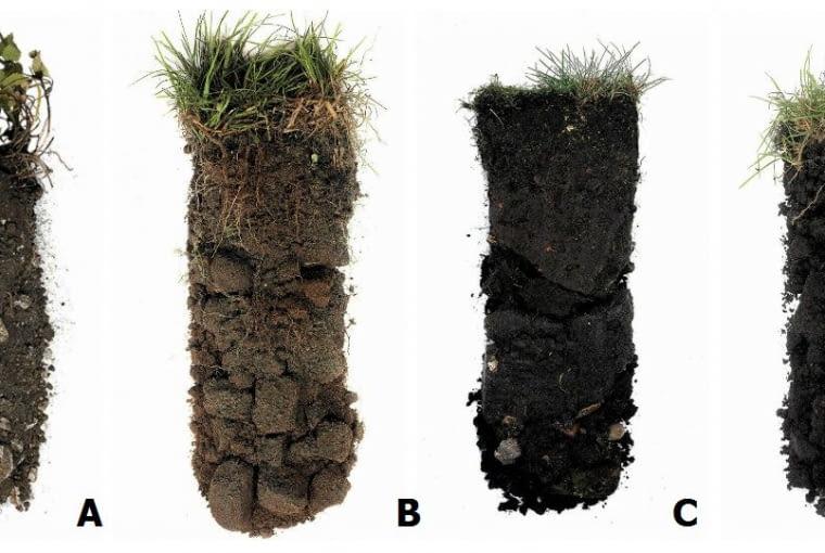 rodzaje gleby