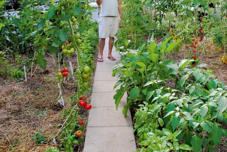 Uprawa Pomidorów Bez Chemii E Ogrody