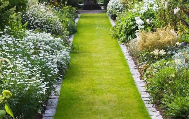 Ścieżka ogrodowa wysiana trawą