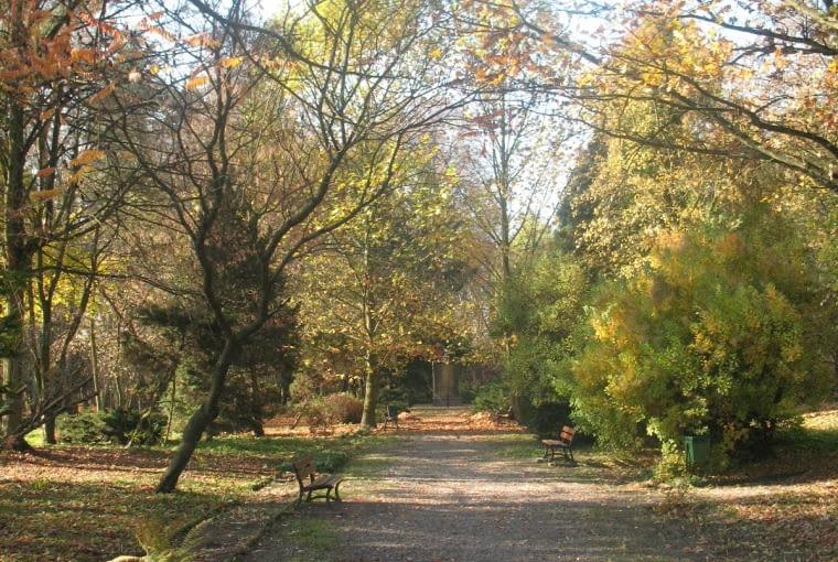 Arboretum w Czarncy