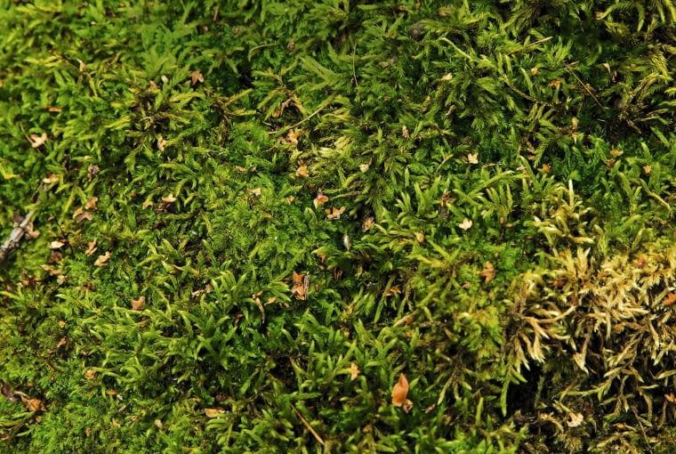 mech na trawie