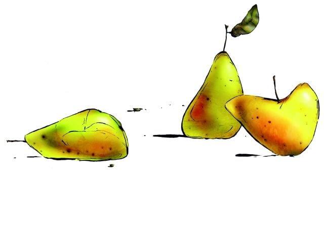 Owoce do przechowania zrywamy, zanim dojrzeją. Te, które opadną, ale są zdrowe, możemy przeznaczyć na przetwory