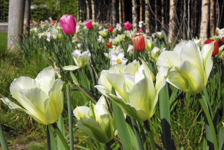 'spring green'