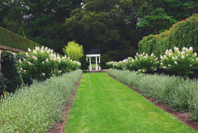 Ciekawy kontrast białych hortensji z ciemnozielonym bluszczem i jasnozielonymi krzewami na obwódce.