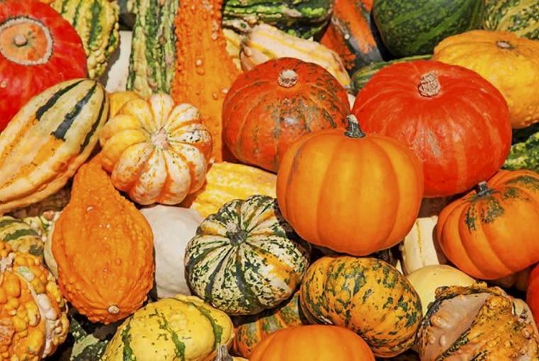 Odmiany dyń - dynie to nie tylko pomarańczowe kule, ale również patisony, cukinie, kabaczki