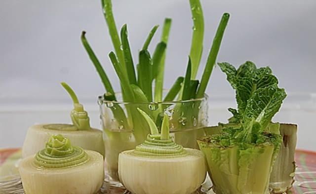 Jak wyhodować szczypiorek z cebuli