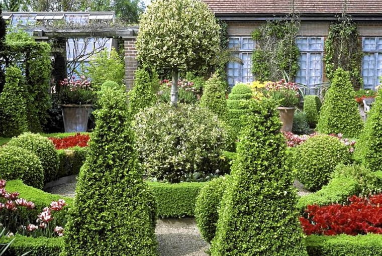 parterre garden with cone shaped topiary trees, gravel, mophead standard of variegated golden ilex (ivy) at centre, planting of red and red and white tulipa ( ulips). may. the dutch garden, east ruston old vicarage garden, norfolk. SLOWA KLUCZOWE: garden gravel trees cone parterre
