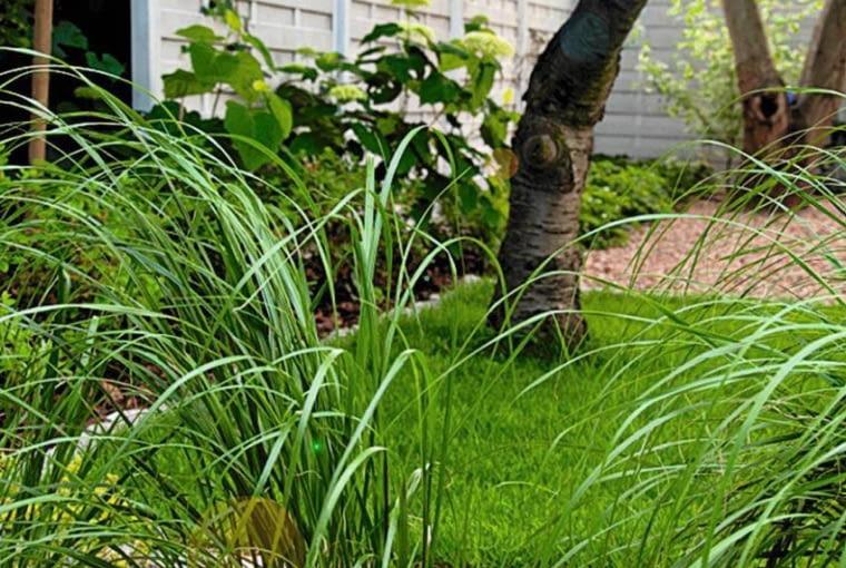 RABATY: proste kształty rabat pasują do nowoczesnej architektury. Pod roślinami został wysypany jasny żwir.