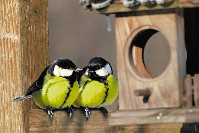 W grudniu można zacząć dokarmianie ptaków - obserwacja ich to świetna zabawa