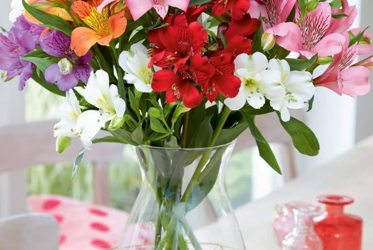 Bukiety różnokolorowe mogą być bogate, ale by wjednobarwnej wiązance alstremerie były wyraziste, kwiatów nie powinno być za dużo.