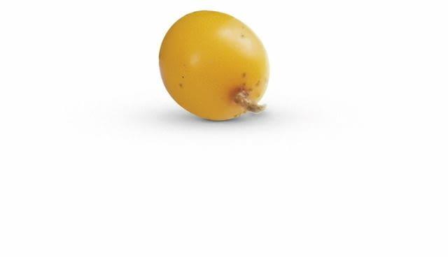 Owoc rokitnika
