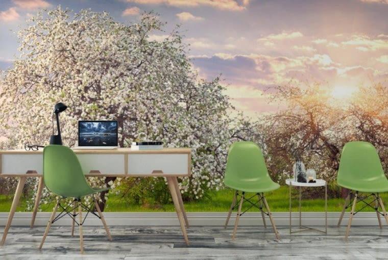 Fototapeta kwitnących jabłoni