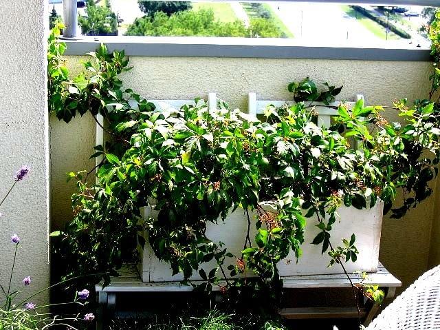 Doniczka na balkon