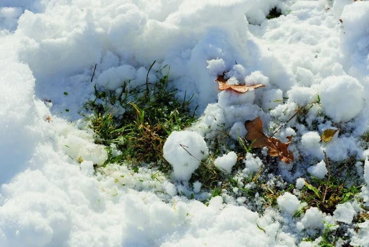Trawnika nie niszczy biała kołderka ze śniegu, ale jego nadmiar może zaszkodzić jej wiosną