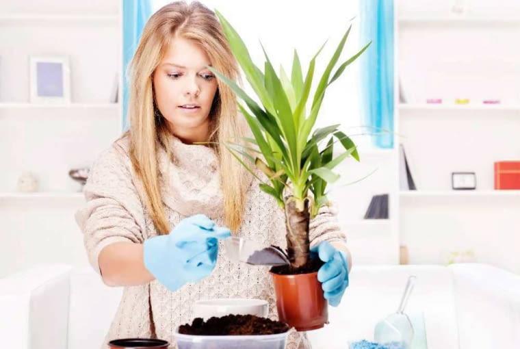 Przesadzanie roślin doniczkowych