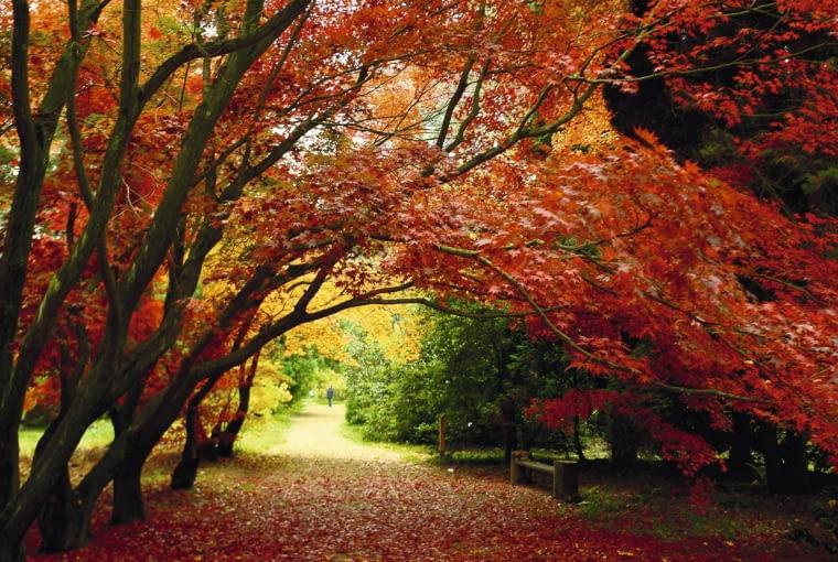 Rogowskie arboretum przypomina jesienią bajkowy las z plątaniną ścieżek zasypanych liśćmi