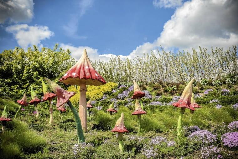 OGROMNE MUCHOMORY wyrastają pośród fioletowej macierzanki, traw i tawuł o żółtych liściach.