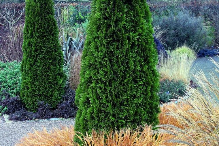 Tylko żywotnik 'Smaragd' wyróżnia się tu ciemną zielenią, natomiast trawy (hakonechloa, miskant i inne), bezlistny klon oraz krzewy przystroiły się w pastelowe beże i szarości.
