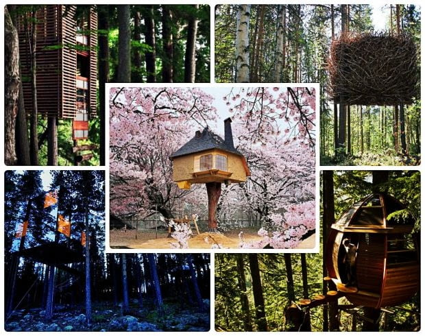 domki na drzewach, projekty