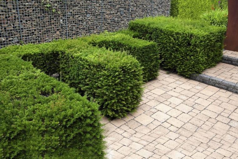 SLOWA KLUCZOWE: gabion hedge, fence, shape, topiary, cut taxus, baccata, evergreen, conifer
